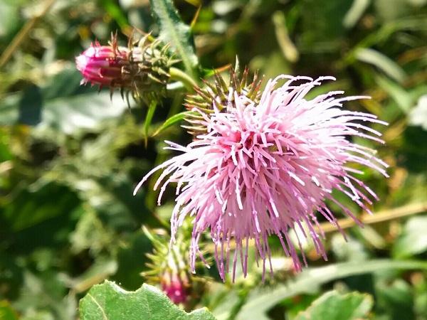 「この花の名前は?」をすぐ解決。植物を撮影するだけで一瞬で識別してくれるアプリが楽しい♡
