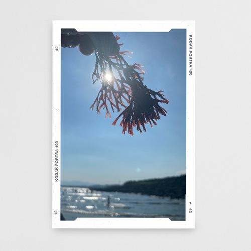 【ストーリー加工】夏の思い出を即シェアしたい!フィルム風テンプレートが揃うアプリ「Conficia」がおすすめ