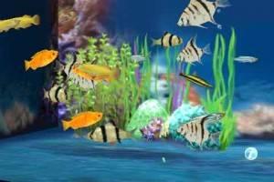 aquarium_ever