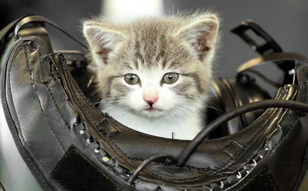 海軍パイロットに拾われた子猫がかわいすぎると話題に♡拾った本人もかなりのイケメンだった!