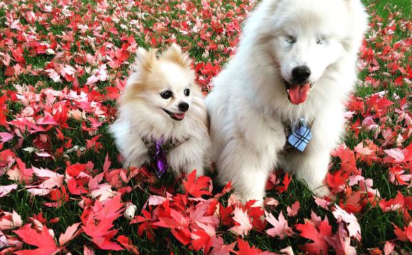 一心同体♡病気で視力を失ったワンコと元捨て犬の友情に心が癒される!