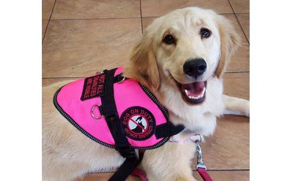 健気な姿にグッとくる…!病気の飼い主を支える介助犬ハーロウのインスタが話題に
