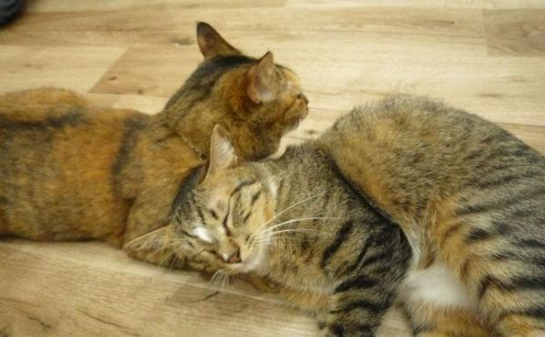 職場にネコがいたら…♡ネコ好きの夢を叶える「オフィス体験会@猫カフェ」が気になる