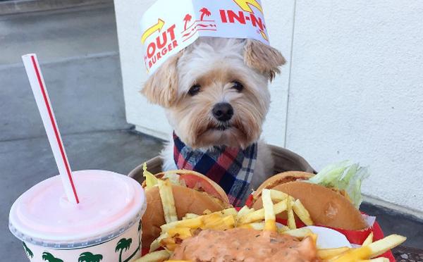 捨て犬からグルメ犬に大変身♪ペットフレンドリーなレストランを紹介するワンコが大人気