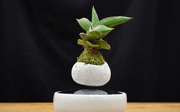 ふわふわ浮いて神秘的♡クラウドファンディングで話題になった「エア盆栽」を実際に使ってみた!