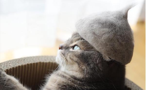 """「これ地毛です…」自分の抜け毛でできた""""どんぐり帽子""""をかぶるニャンコがかわいすぎる♡"""