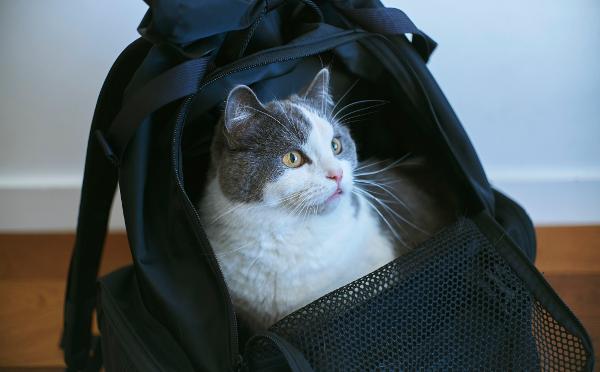 ネコ好きモデル、小谷実由と「ミツカルストア」がコラボ!猫と一緒にお出かけできるバックパックが発売