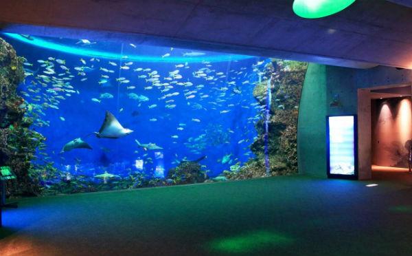 お魚に囲まれて過ごす夜☆鴨川シーワールド「夜の女子会プラン」が楽しそう♪