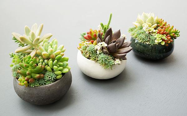 新生活に植物を☆イデーショップ ヴァリエテ渋谷店で多肉植物のフェアが開催
