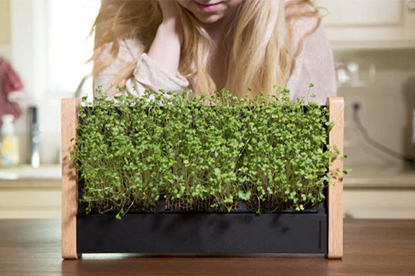 新鮮なハーブがいつでも手に入る♡ミニマルデザインのフレーム・ガーデンがステキ