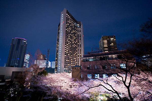 ホテル外観夜景と桜並木のライトアップ