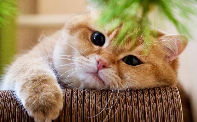 見ているだけで幸せ…!まん丸モフモフなお顔がかわいすぎるニャンコがインスタで大人気