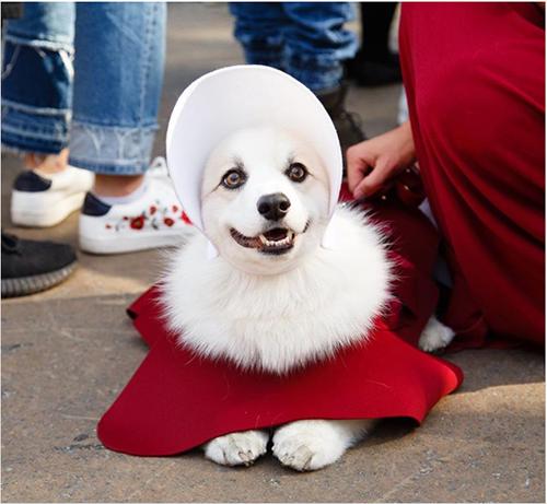 ペットだって負けてない!NYで恒例の犬のハロウィン・パレードが今年も開催。ユニークな衣装がかわいすぎ♡