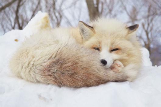 【宮城・山形・青森】冬を満喫出来る東北旅行で訪れたい3つのおすすめスポット♡