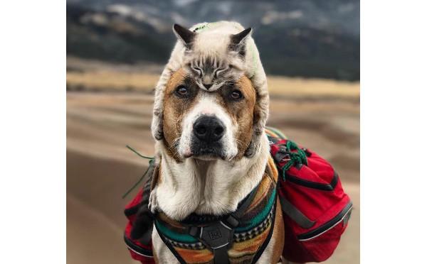 インスタグラムで話題!仲良しすぎる犬と猫のアウトドアライフが素敵♡
