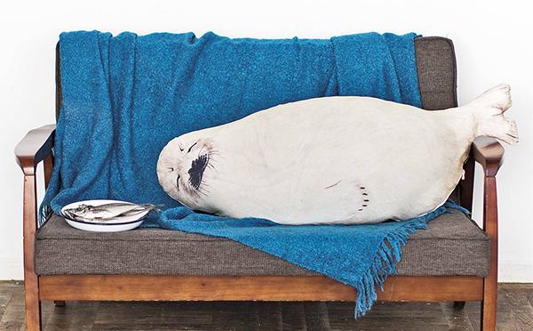 なにこのアザラシかわいすぎ…♡フェリシモの毛布を入れて使えるクッションケースが秀逸