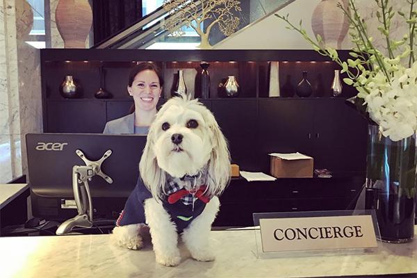 """犬好きにはたまらない♡ルームサービスでワンちゃんを""""オーダー""""できるサンフランシスコのホテル"""