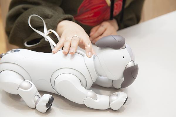 【isuta GIRL】約12年ぶりの登場で話題!ソニーのイヌ型ロボット「aibo(アイボ)」は植村麻由も虜になるかわいさ♡