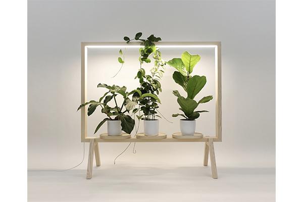 自然を身近に感じられる♩窓がない部屋でも明るい光とグリーンが楽しめる植物用フレーム