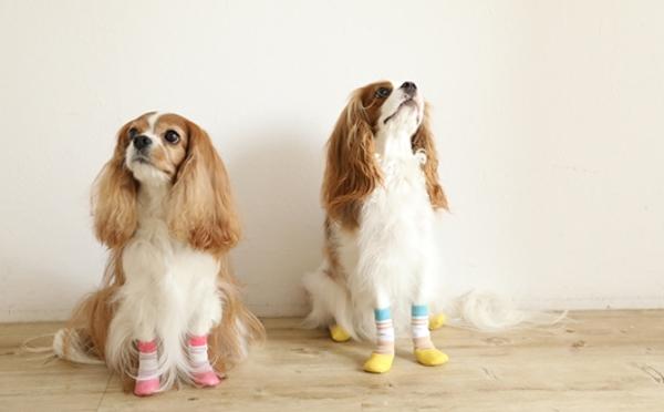 ワンコの足をアスファルトの熱から守ってくれる犬用ソックスが秀逸!愛犬家へのギフトにも♡