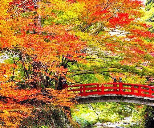 今年の紅葉、どこに見に行く?広島県、宮島の約200本の紅葉が見られる「紅葉谷公園」の景色が圧巻!