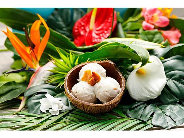 ココナッツ殻の器が南国気分♩牛乳も卵も不使用のオーガニックココナッツアイスクリームが日本初上陸!