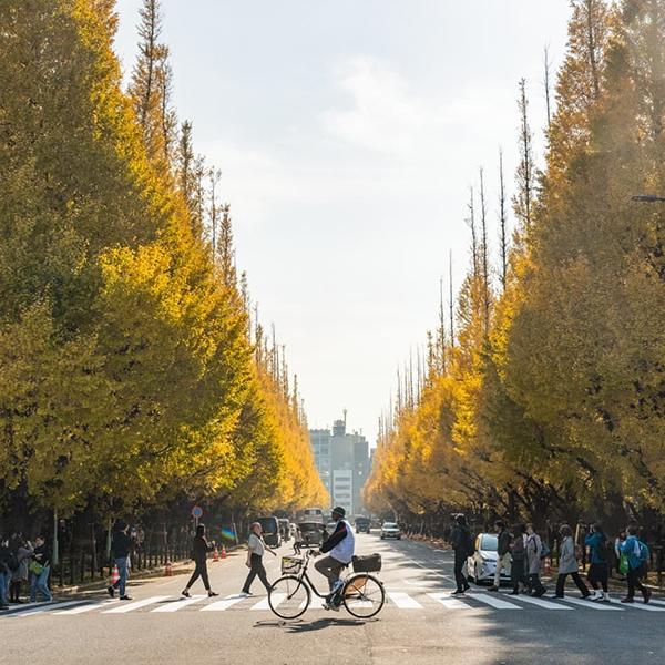 秋はあっという間に終わるから。東京から行ける紅葉スポット5選をおさえておいて