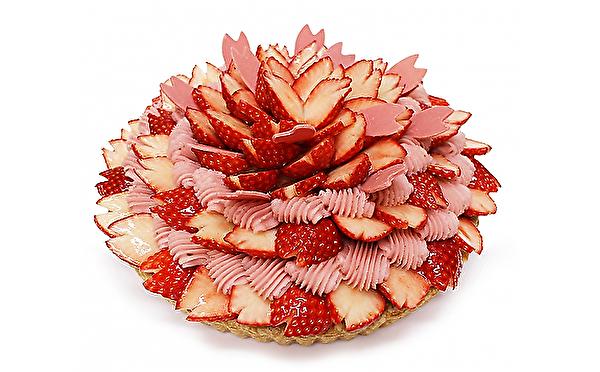満開から葉桜へ、季節の移りかわりをケーキで表現♩カフェコムサに春を感じる「桜ケーキ」2種がお目見え♡