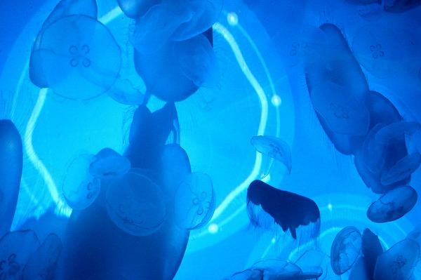 大切な人とのお出かけにも♡「すみだ水族館」が6月15日から営業再開決定!