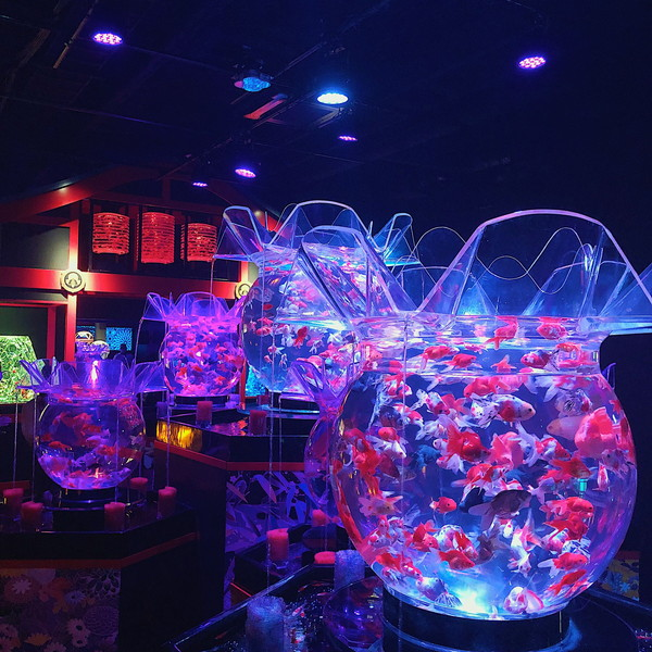 金魚が織りなす、優美な非日常空間がそこにはありました♡東京・日本橋に「アートアクアリウム美術館」が誕生