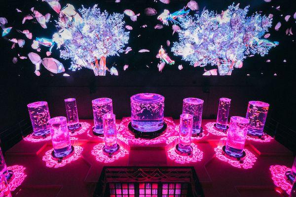 日本橋の「アートアクアリウム美術館」が期間限定で春一色に。特別企画『桜金魚 舞い泳ぐ』が開催されます