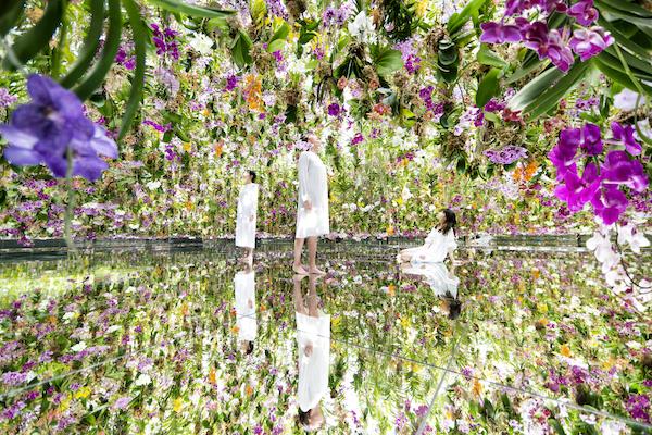 """1万3000株を超える""""花""""の世界に、ちょっとお邪魔します。「チームラボプラネッツ」に2つの庭園が誕生"""