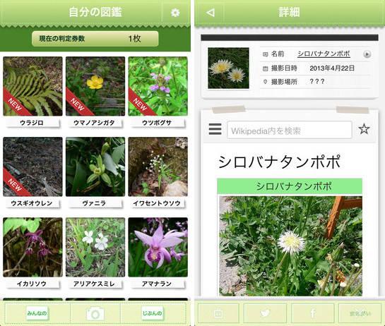 plantjidge01