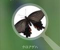 親子で使える!美しい写真で魅せる昆虫図鑑アプリ『にほんの昆虫』が超便利♫