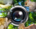 シャッター音が静かで安心!動物の撮影にピッタリな写真アプリ『観察カメラ』