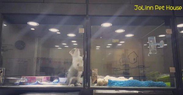 Jolinn Pet House