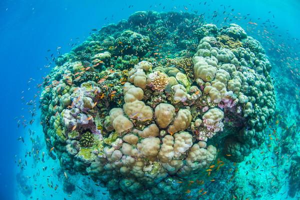 Underwater-room-11