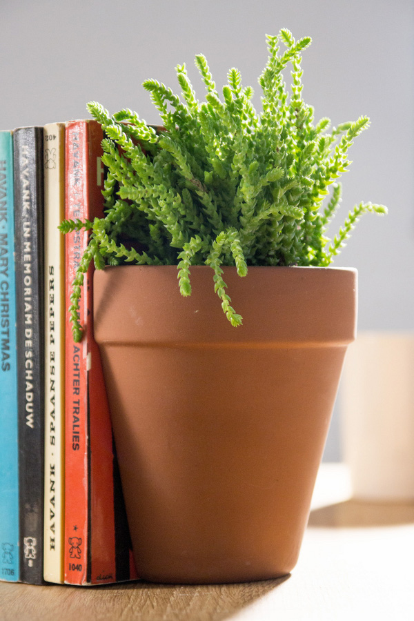 Plant Pot Living Bookends