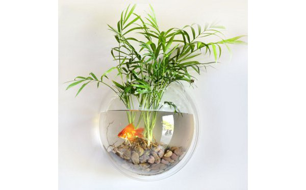 Wall Hanging Fish Tank