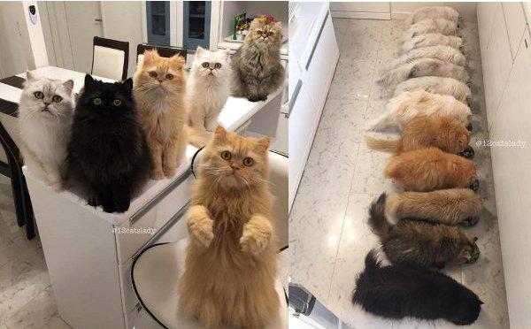12catslady