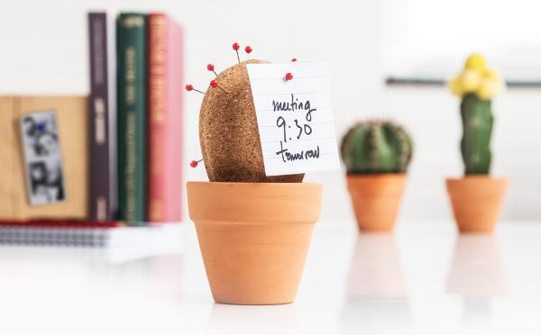 Cactus00